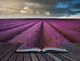 Scenic lavender field