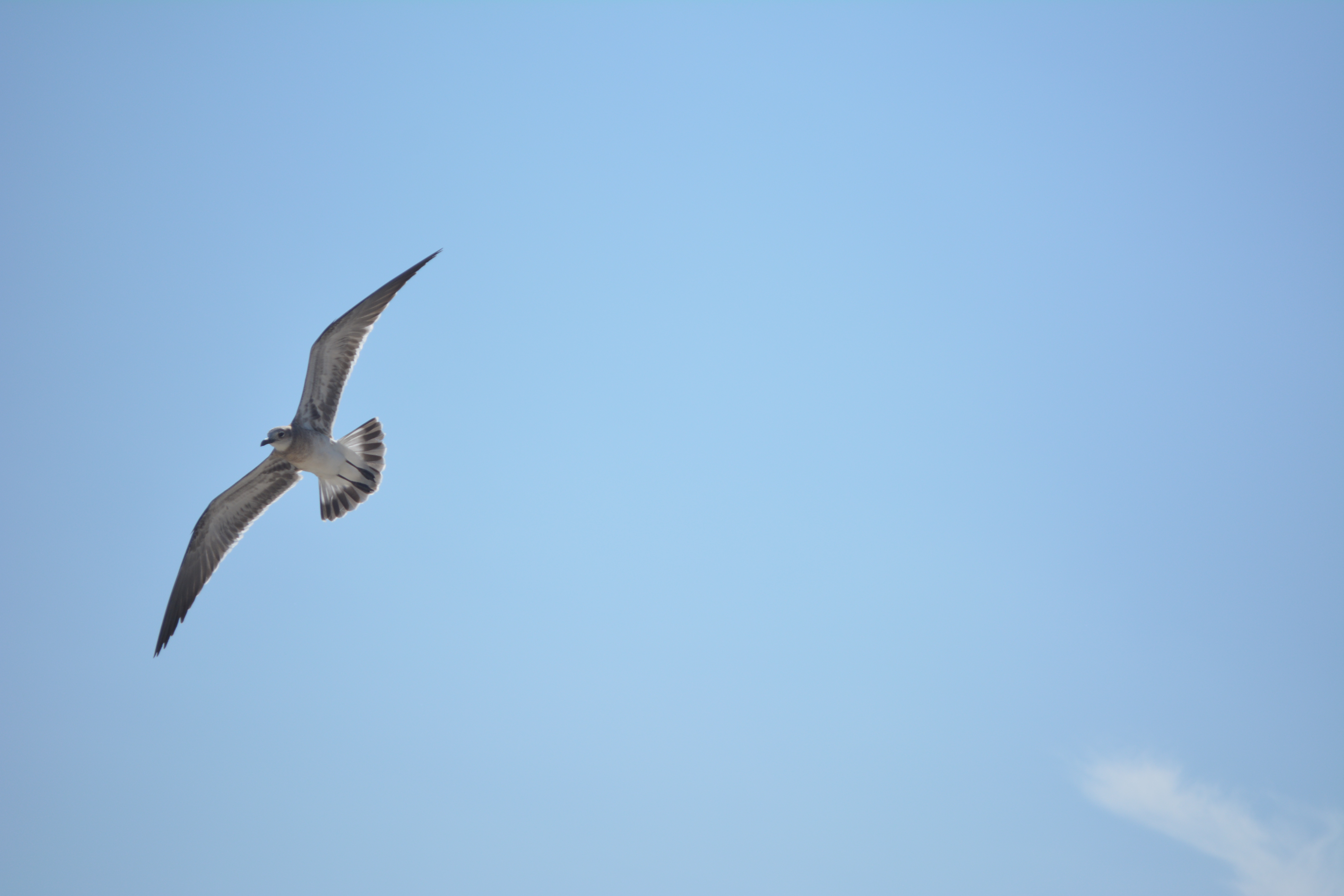 Did you know seagulls are clever intelligent birds donna george seagull altavistaventures Image collections