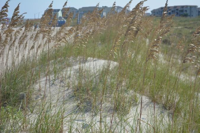 dunes, freeman park