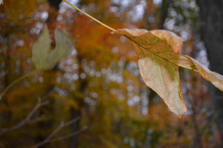 Air born leaf in the forest