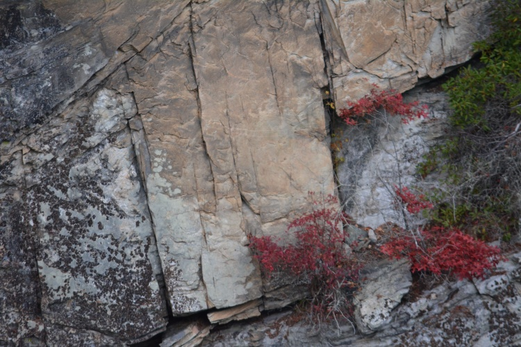 Red foliage creeping out from between the rock