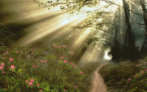 Sunlight peeks through the woods