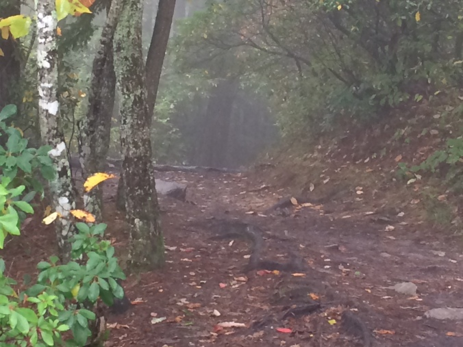 Linville Trail