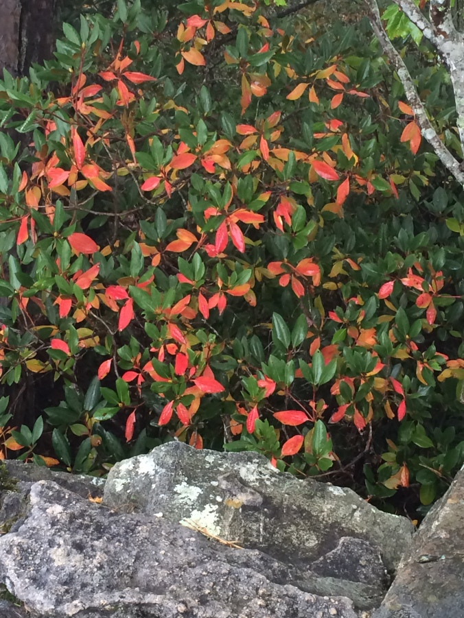 Salmon foliage tree