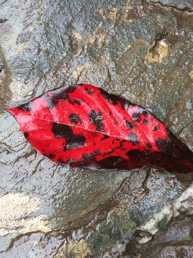 Blood red spotted foliage