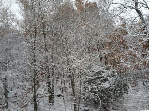 1sr snow storm 2014