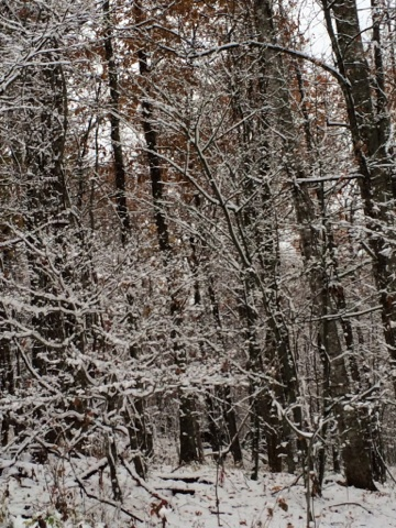 1st Snowfall Smoky Mountains 2014