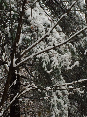 Wooded snow