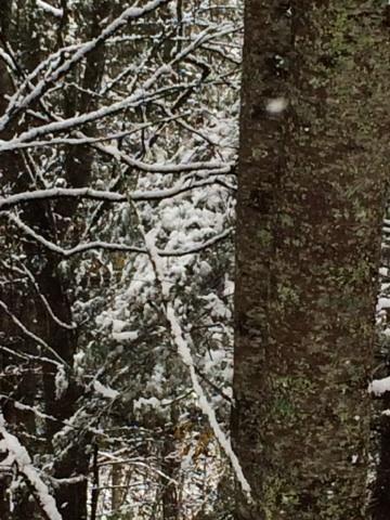 Woodys snow
