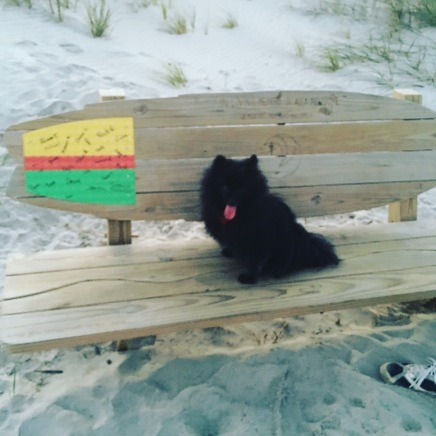 Black Pomeranian, Surf Bench, Bench