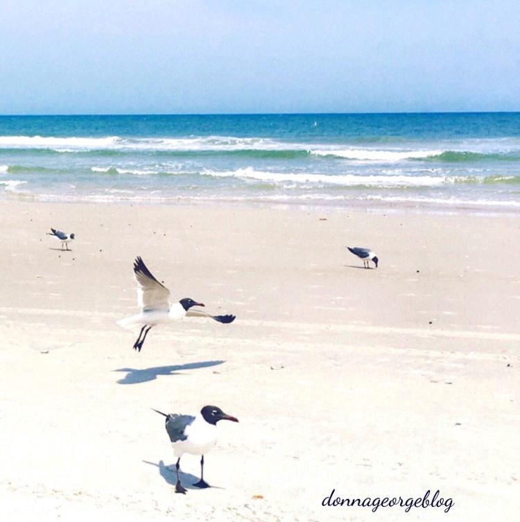 Beach, Seagulls
