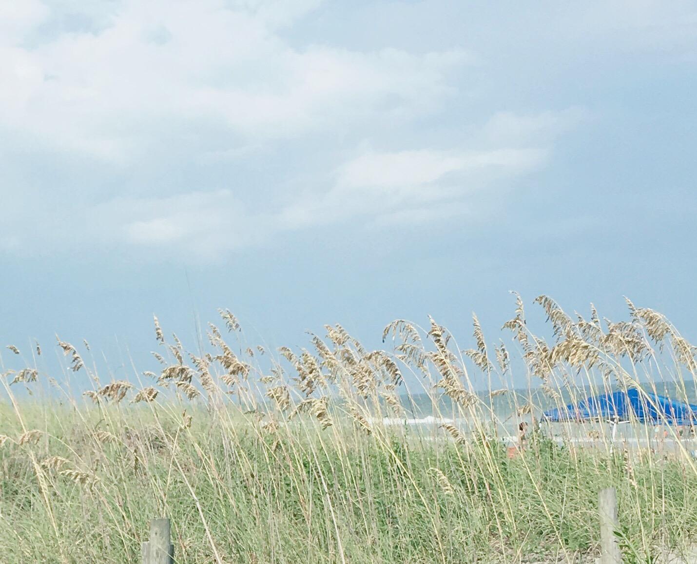 beach, shoreline, sea oats